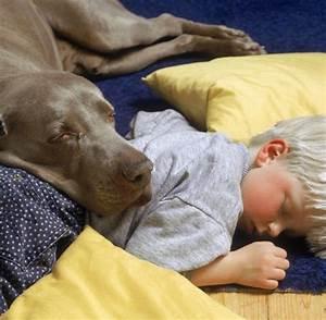 Hund Im Haus : laktobazillen hund im haus sch tzt wom glich vor ~ Lizthompson.info Haus und Dekorationen