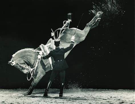 cadre noir de saumur adresse le cadre noir de saumur luxury equestrian style