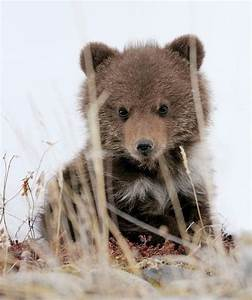 Baby bear.