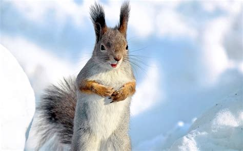 Animals Wallpapers High Resolution - winter animal wallpapers high resolution free