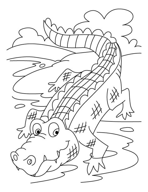 what color are crocodiles free coloring pages of alligator and crocodile