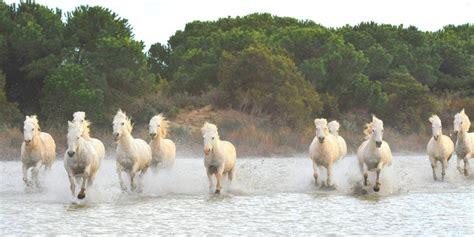 chambre d hotes remy de provence camargue tourisme camargue cheval saintes maries de la