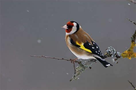 birdlab le jeu pour observer les oiseaux et aider la science