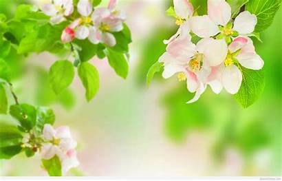 Flowers Spring Wallpapers