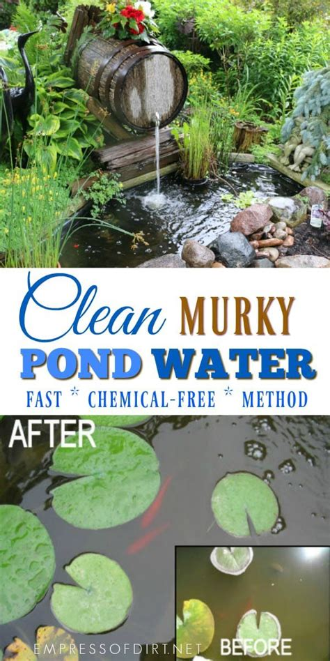 Clean Backyard Pond by How To Clean Gross Murky Pond Water Fast Without Chemicals