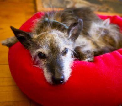 polidipsia  poliuria nel cane  diagnosi