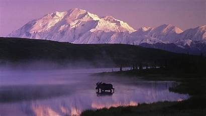 Alaska Backgrounds Wallpapers Moose Desktop Background 4k