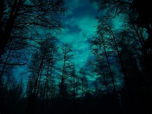 Moonlight, Forest, By, Hopelessnight
