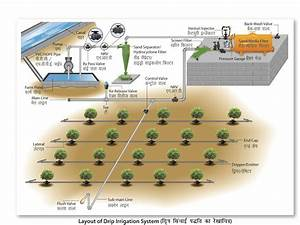 Drip Irrigation Vs Sprinkler Irrigation Farming