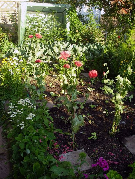 Interview Zwischen Gartenblog Und Gemüsegarten » Gartenblog