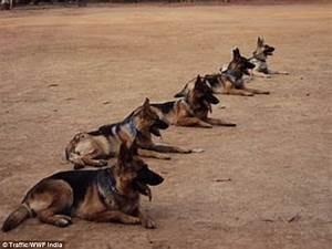 Hero sniffer dogs thwarted SIXTEEN terror attacks: Secret ...