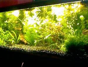 Tropical Fish Centre TonyP s Aquarium