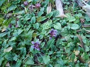 Couvre Sol Vivace : plantes vivaces couvre sol page 15 au jardin forum ~ Premium-room.com Idées de Décoration