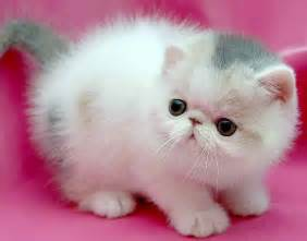 pink cats small cat on a pink background wallpapers and