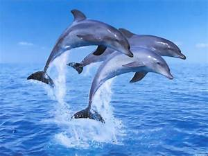 Living 3D Dolphins Animated Desktop Background Wallpapers