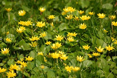 with yellow flowers yellow flower mishmash this thing called life