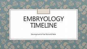 Embryology Timeline Nose and Paranasal Sinuses