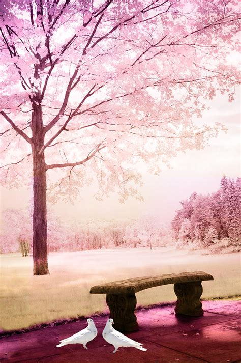 surreal fantasy park bench  white doves photograph