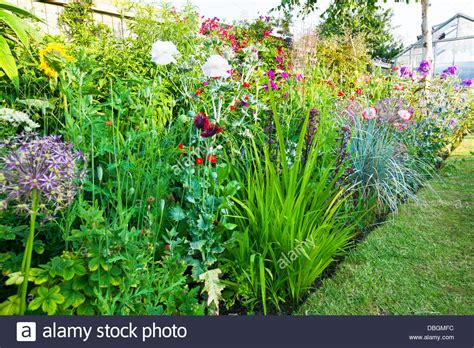Typical English Garden Plants Flowers Densely Planted