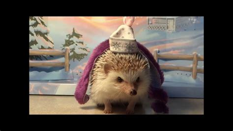 Hedgehog  Ee  Dress Ee   Up Youtube