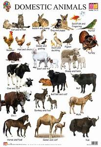 Domestic Animals - Buy Educational Wall Charts-early ...