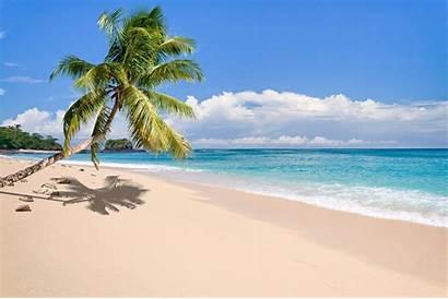 Tropical Madagascar Palm Island Trees Sand Landscape