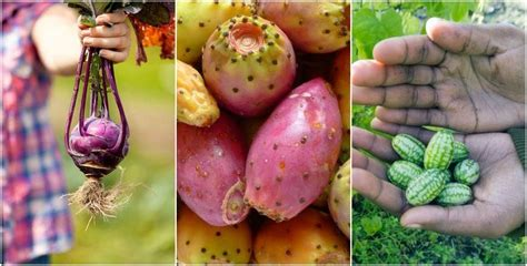 12 Weird & Unusual Fruits & Veggies You Can Grow At Home