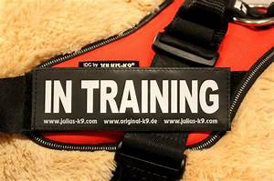 U0026quot In Training U0026quot  Large    Small Harness Labels