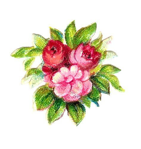 antique images digital vintage  pink rose botanical