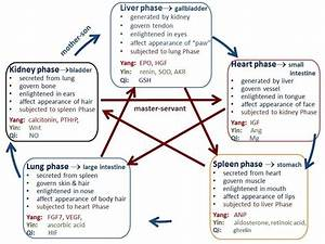 The Functions And Interrelationships Of The Five Phases In