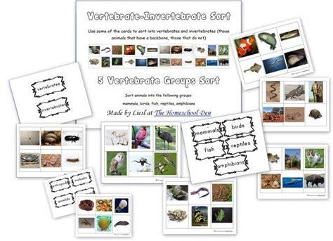 17 Best images about Mugurkaulnieki un bezmugurkaulnieki on Pinterest | Montessori, Biology and ...