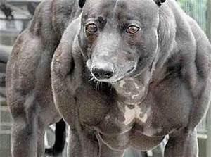 Worlds Strongest Dog