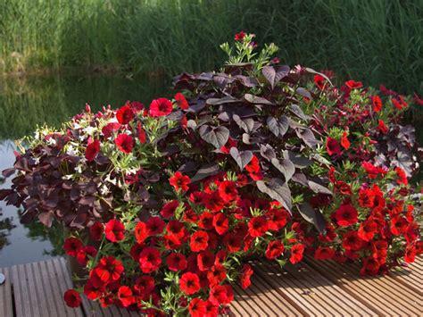 Pflanzen Für Balkon by Bl 252 Hpflanzen F 252 R Den Balkon In Rot