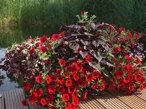 Balkon Pflanzen Ideen : liebevolle pflanzidee f r balkon und terrasse ~ Whattoseeinmadrid.com Haus und Dekorationen