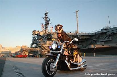 Chopper Biker Dog Uss Moto Cani Motociclismo