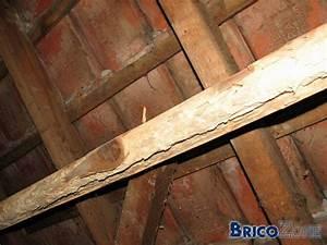 Produit Contre Les Termites : port ger mon planche contre les mites ~ Melissatoandfro.com Idées de Décoration