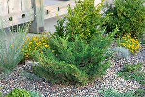 Rich's Foxwillow Pines Nursery, Inc. - Juniperus chinensis ...