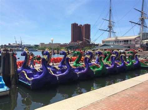 Paddle Boats Harbor by Inner Harbor Paddle Boats Baltimore Md Top Tips Before
