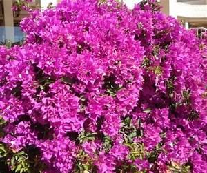 Garten Blumen Pflanzen : garten terrasse und balkon blumen beuchert ~ Markanthonyermac.com Haus und Dekorationen