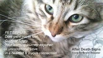 cat grief cat loss quote greiving cat loss inspirational cat