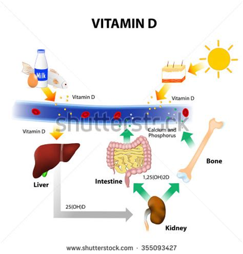vitamin d foods contain vitamin d skin absorbs solar uvb