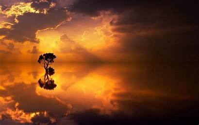 Tree Reflection Lonely 4k Sea Horizon Background