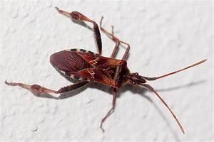 Schwarzer Käfer Im Haus : heimische wanzenvielfalt nabu ~ Somuchworld.com Haus und Dekorationen
