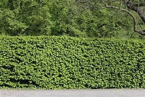 Darf Nachbar Meine Hecke Schneiden : buchenhecke pflanzen buchenhecke pflanzen so gehen sie am ~ Lizthompson.info Haus und Dekorationen