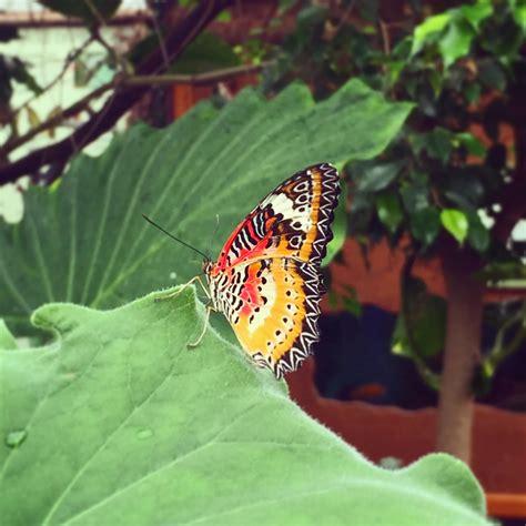 Farfalle In Casa by Butterfly Arc La Casa Delle Farfalle Viaggi Di Guenda