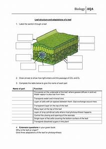 Leaf Structure And Function Worksheet New Aqa By Scienefun