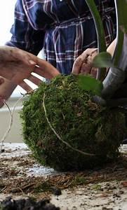 Kokedama Selber Machen : kokedama kokedama garten und freizeit h ngende pflanzen h ngende g rten und pflanzen ~ Orissabook.com Haus und Dekorationen
