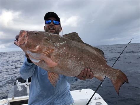 fishing middle grounds clearwater deep grouper fish sea trip fl water sportfishing trips
