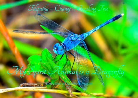 symbolic dragonfly meaning dragonfly spirit totem