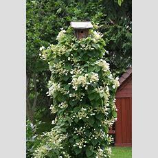 205 Best Plant Identification Images On Pinterest